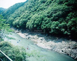 森を流れる川の写真・画像素材[1003014]