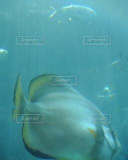水の下で泳ぐ魚の写真・画像素材[4159553]