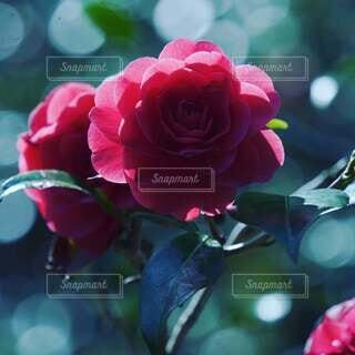 花のクローズアップの写真・画像素材[4248406]