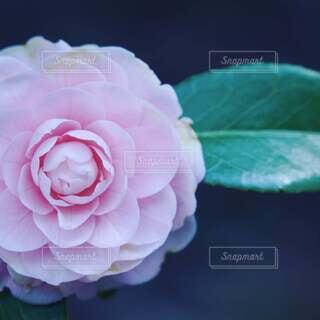 花のクローズアップの写真・画像素材[4248405]
