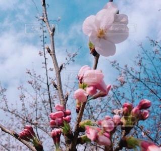 """""""芽吹く春""""の写真・画像素材[4205295]"""