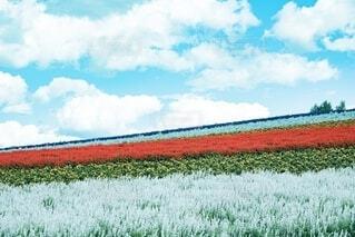 四季彩の丘の写真・画像素材[4164348]