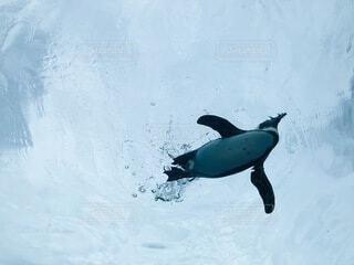 空飛ぶペンギンの写真・画像素材[4189276]