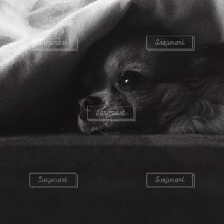 犬の写真・画像素材[206020]