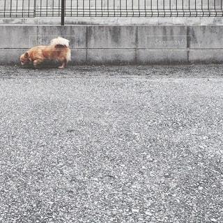 犬の写真・画像素材[206023]