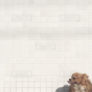犬の写真・画像素材[206024]