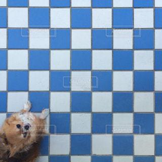 犬の写真・画像素材[206027]
