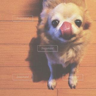 犬 - No.206030