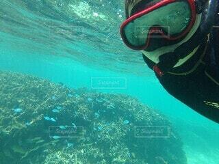 珊瑚礁でシュノーケリングの写真・画像素材[4178793]