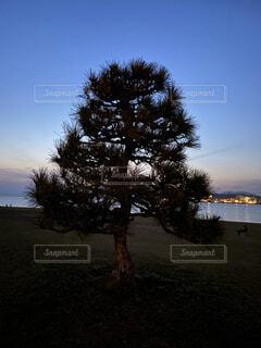 一本の暗がりに立つ木の写真・画像素材[4303116]