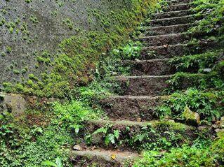 苔むす階段の写真・画像素材[4168763]