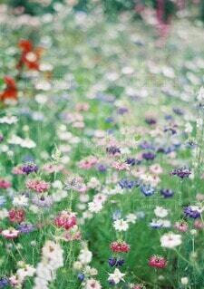 花園のクローズアップの写真・画像素材[4168913]