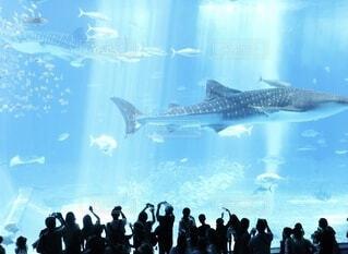 水族館の魚に群がる人間たちの写真・画像素材[4171058]