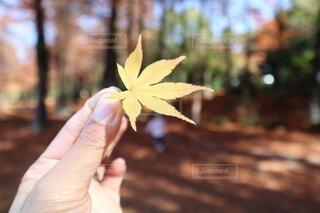 葉っぱを持つ手の写真・画像素材[4178836]