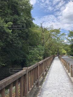 木々の緑と空の青を見ながら歩く道の写真・画像素材[4193044]