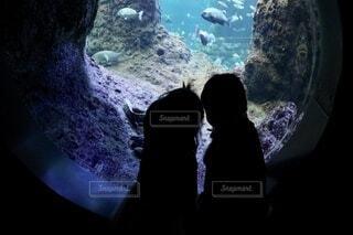 水槽を覗き込む子どもたちの写真・画像素材[4212839]