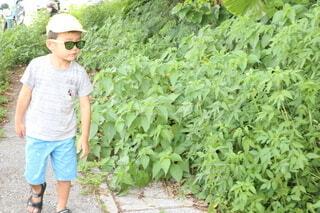 緑の中を散策する男の子の写真・画像素材[4214440]