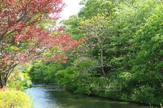 自然の風景の写真・画像素材[4362165]