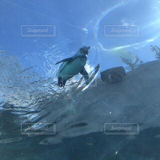 空飛ぶペンギンの写真・画像素材[4180463]