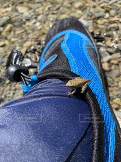 カエルが足に着地の写真・画像素材[4171059]