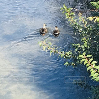 水面 川の写真・画像素材[4177886]