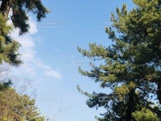 大きな木の写真・画像素材[4173230]