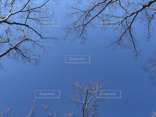 木のクローズアップの写真・画像素材[4173236]
