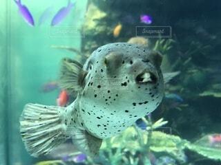 水族館魚の写真・画像素材[4173246]