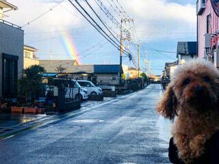 虹と犬の写真・画像素材[4178140]