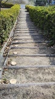 公園の下り階段の写真・画像素材[4285136]