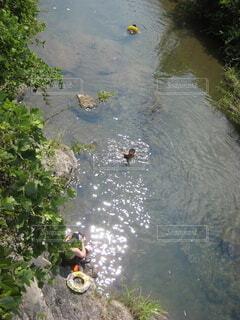 川遊びの写真・画像素材[4320740]