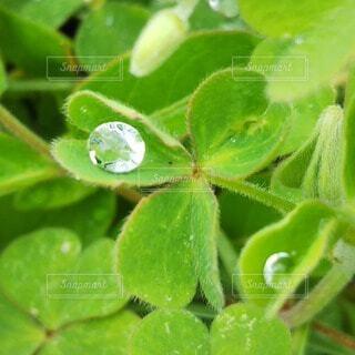 雨上がりの草むらの写真・画像素材[4369913]
