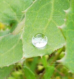 葉の上の雨粒の写真・画像素材[4369985]