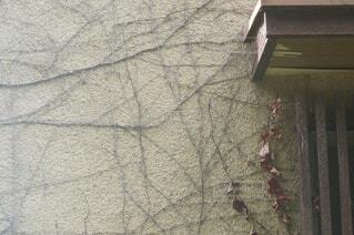 外壁に蔦の這う中古住宅の写真・画像素材[4759880]