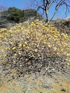 花のクローズアップの写真・画像素材[4182465]