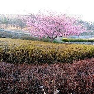 草で覆われた野原のぼやけたイメージの写真・画像素材[4183176]