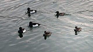カモメの群れが水の中を泳いでいるの写真・画像素材[4248435]