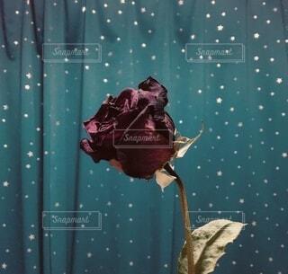 薔薇のドライフラワーの写真・画像素材[4181015]