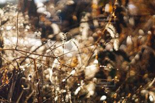木のクローズアップの写真・画像素材[4179439]