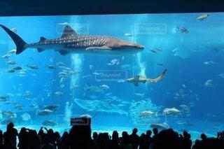 美ら海水族館の写真・画像素材[4182523]