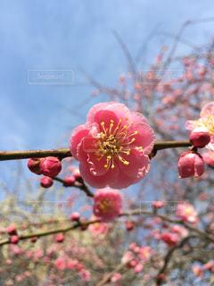 花の写真・画像素材[408017]