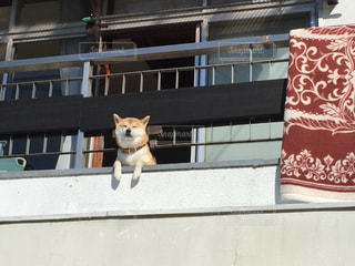 犬の写真・画像素材[255111]