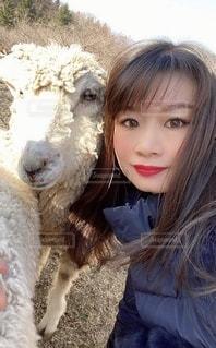 羊のクローズアップの写真・画像素材[3354526]