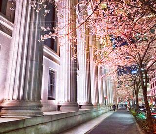 日本橋桜の写真・画像素材[4185986]