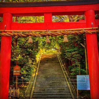 鶴岡八幡宮の写真・画像素材[4188423]