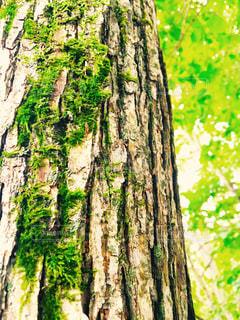 森林 - No.178059