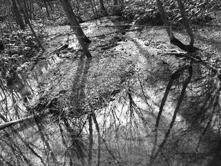 森林 - No.178064