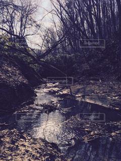 森林 - No.178065