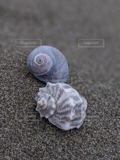 砂浜の貝殻の写真・画像素材[4194273]