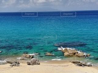 泳ぎたい 潜りたい 遊びたいの写真・画像素材[4205861]